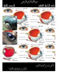 العين الكاميرا الحية.pdf