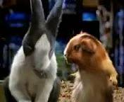Funny_Hamster.3gp